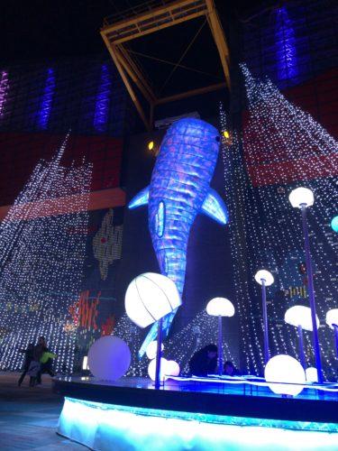 大阪デート 「海遊館」 今の季節が特にロマンチック